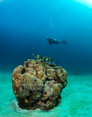 Underwater Photography in Singapore